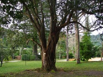 Terra Nostra Garden Botanical Library